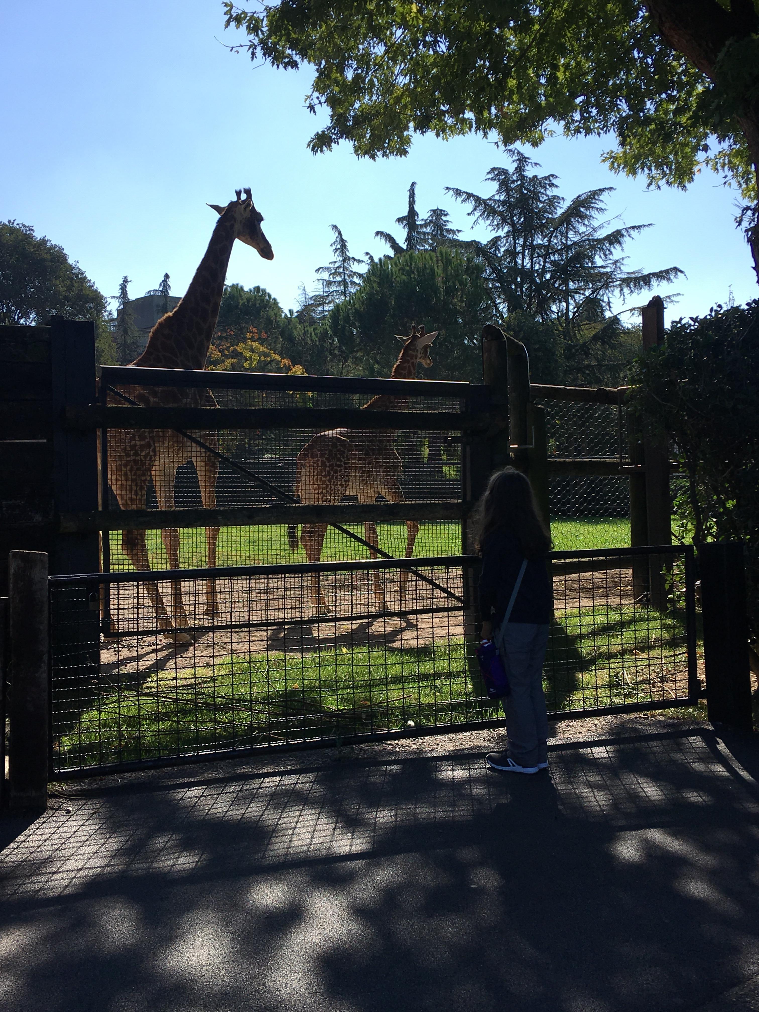 Giraffe al Parco delle Cornelle