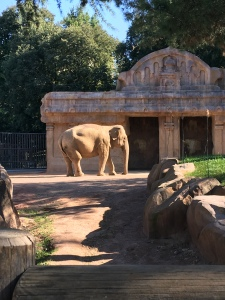 Elefanti al parco delle cornelle