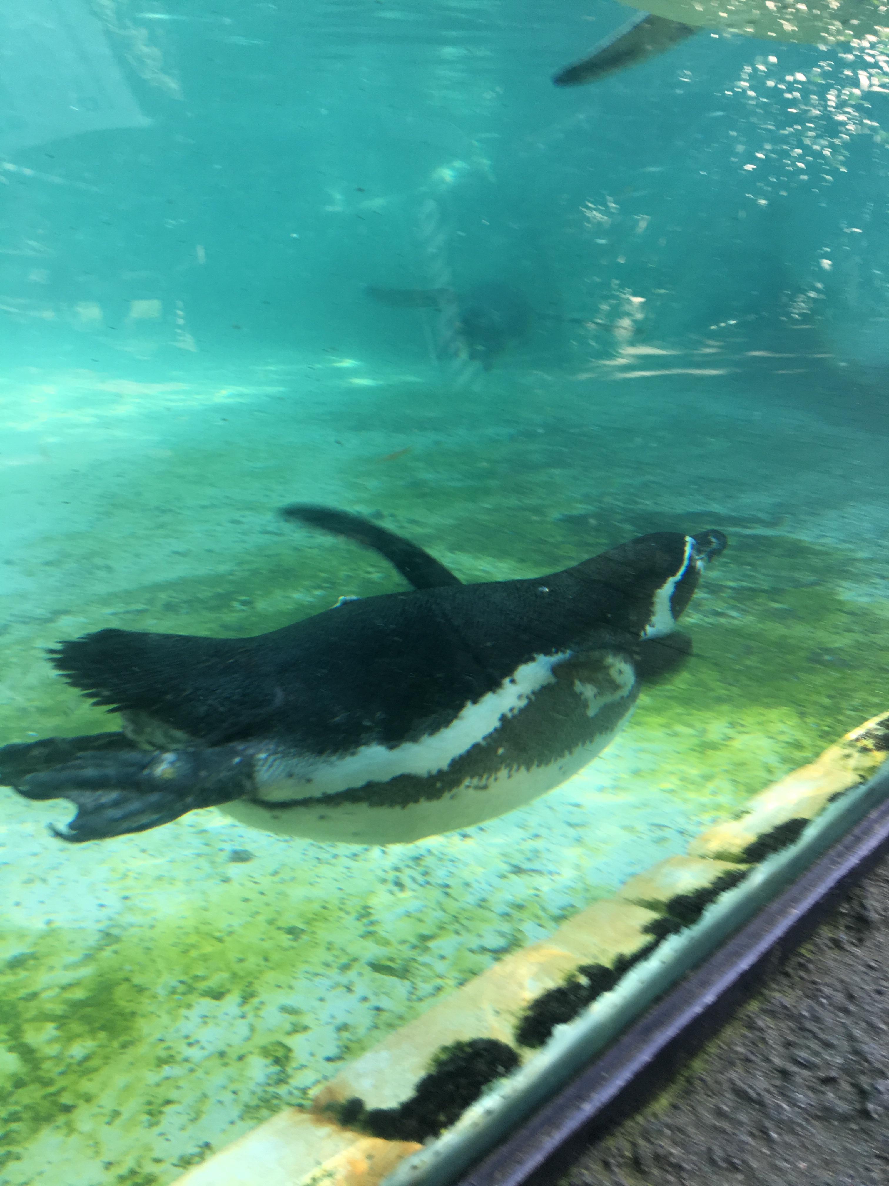 Pinguini al parco delle cornelle